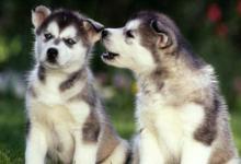 生肖狗哪个时辰出生好?