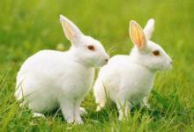 1987年属兔生肖婚配表