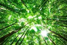 大林木命和什么命相生?