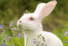 1975年属兔与什么生肖最配相冲?