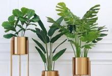 客厅正财位适合摆什么绿植?