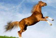 属马和哪些生肖相克?