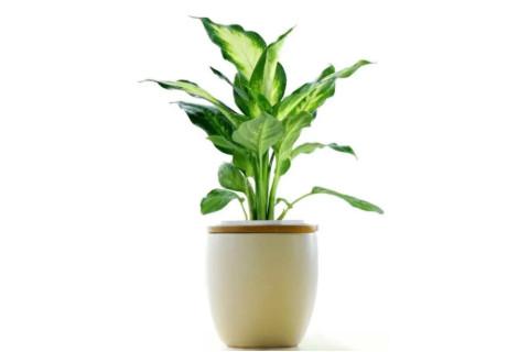 办公室植物风水摆放禁忌
