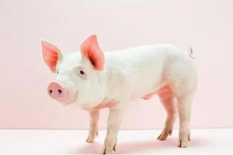 属猪人的住房风水