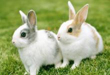 梦见兔子是什么意思?
