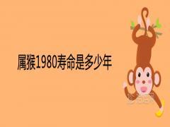 属猴1980寿命是多少年41岁有一灾是真的吗