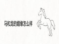 马和龙的姻缘怎么样
