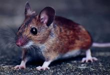 鼠年酉时出生的男孩命运分析