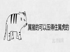 属猪的可以压得住属虎的吗在一起结婚好不好