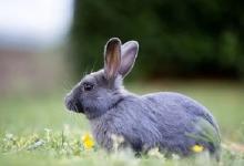 属兔的2021年多大岁数?