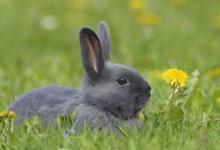 属兔事业合作生肖是哪些?