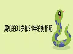 属蛇的31岁和94年的狗相配合适吗