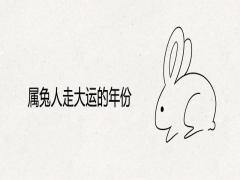 属兔人走大运的年份