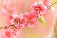 命带桃花的女人八字特征