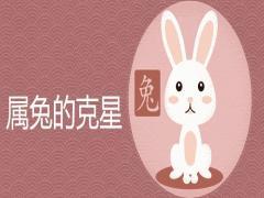 属兔的克星是什么属相不宜婚配
