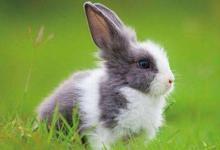 属兔女最喜欢什么生肖男?