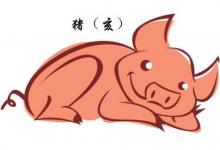 生肖猪生于哪年?