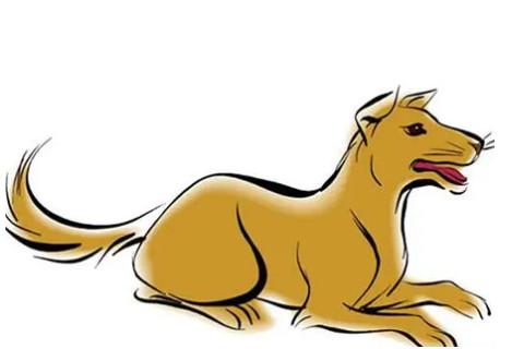 生肖狗起什么名字好?