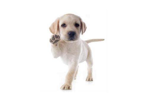 属狗的发达的名字有哪些?