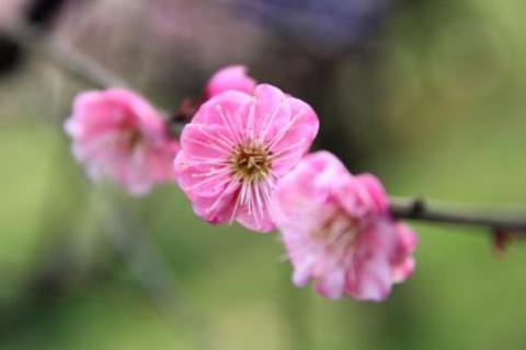 农历几月的女人桃花旺盛?