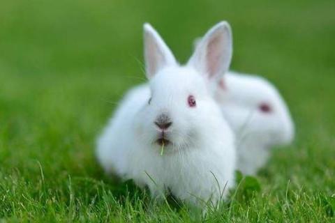 属兔的人起什么名字好?