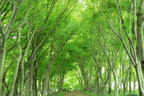 大林木命在哪里方位最旺?