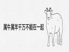 属牛属羊千万不能在一起为什么结婚配对后的结局如何
