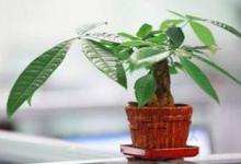 什么植物是有着不错的风水作用?