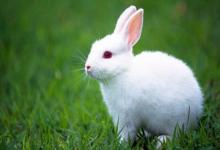 属兔人一生克谁?