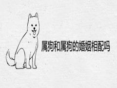 属狗和属狗的婚姻相配吗