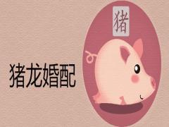 猪和龙合不合财适合做夫妻吗