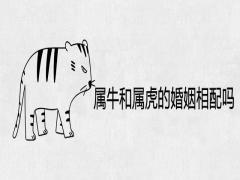 属牛和属虎的婚姻相配吗