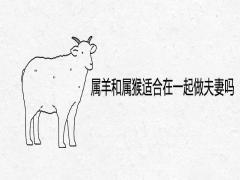属羊和属猴适合在一起做夫妻吗