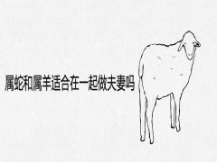 属蛇和属羊适合在一起做夫妻吗