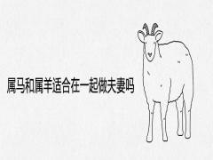 属马和属羊适合在一起做夫妻吗