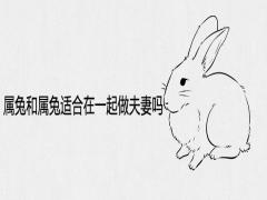 属兔和属兔适合在一起做夫妻吗