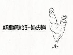 属鸡和属鸡适合在一起做夫妻吗