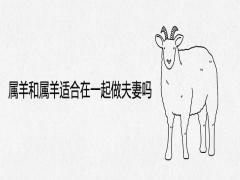 属羊和属羊适合在一起做夫妻吗