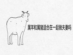 属羊和属猪适合在一起做夫妻吗