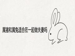 属猪和属兔适合在一起做夫妻吗