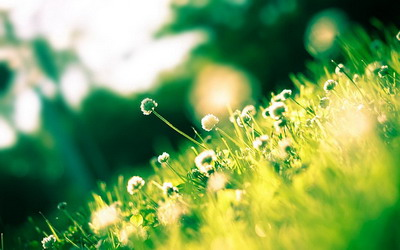 家里养文竹的吉凶,家里千万不能养的6种花