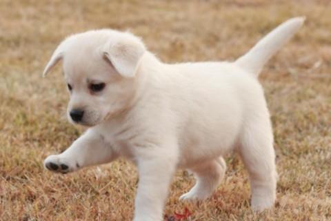 梦见狗是什么意思 是不吉利的象征吗