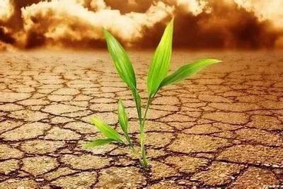 适合土命之人的岗位类型,金木水火土哪个代表财运