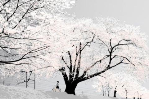 梦见下雪预示着什么 生活富足财运丰厚