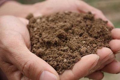 土命的人种什么植物好?五行属土的花卉植物