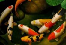 梦见鱼有什么寓意 吉祥富贵财运滚滚