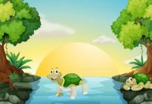 梦见乌龟预示着什么 吉祥如意事事顺心