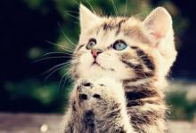梦见猫预示着什么 吉凶相伴同性相斥